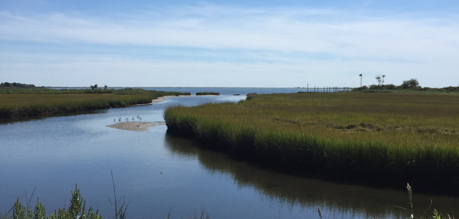 image shows a verdant coastal marsh, with a channel leading out to the ocean
