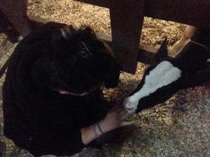 AJ with calf