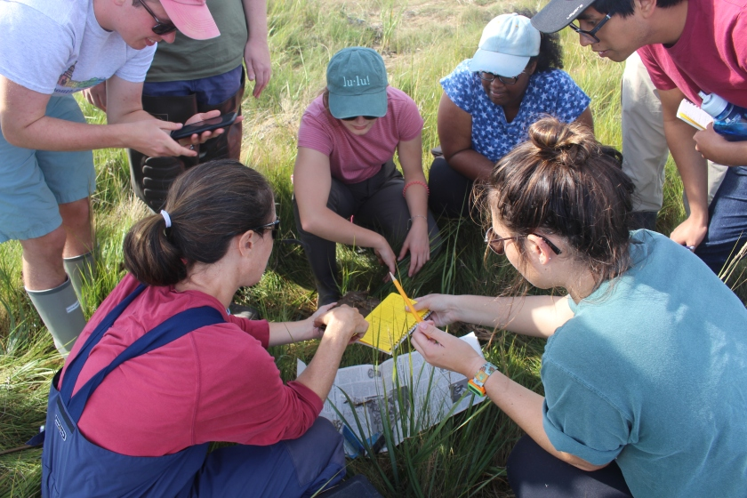 picture shows a group of students and a professor crouching in marsh grass, focusing intensely