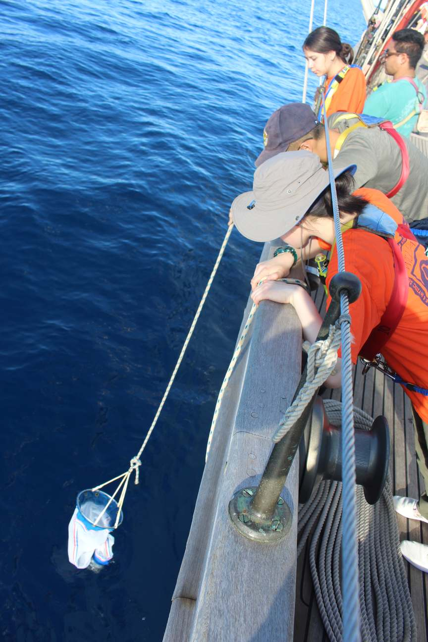 Leaning over the raining of a ship, four students stare into the water at a small, cylindrical net dangling from a rope just at the water's surface